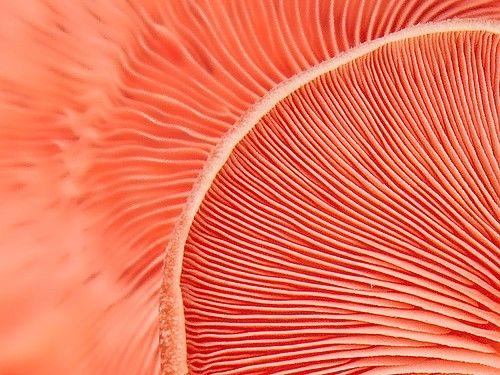Patterns of nature - mushroom gills