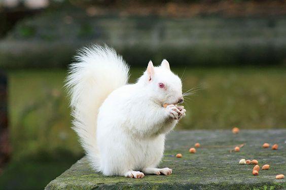 Vraies couleurs insolites et étranges d'animaux http://www.toolito.com/25-animaux-couleurs-improbables-mais-vraies/