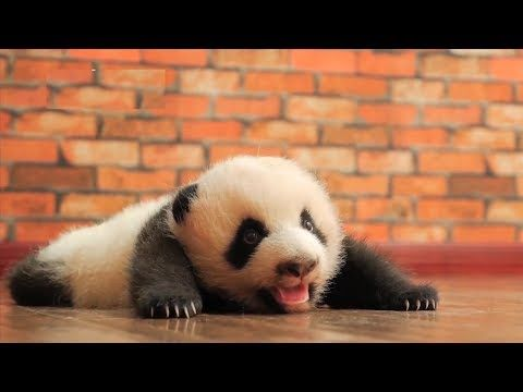 Cute Baby Animals Compilation Cutest Animal Videos 2019