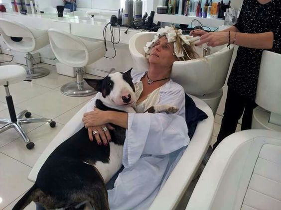 Doesn't every bully mum take their dog to the hairdressers?