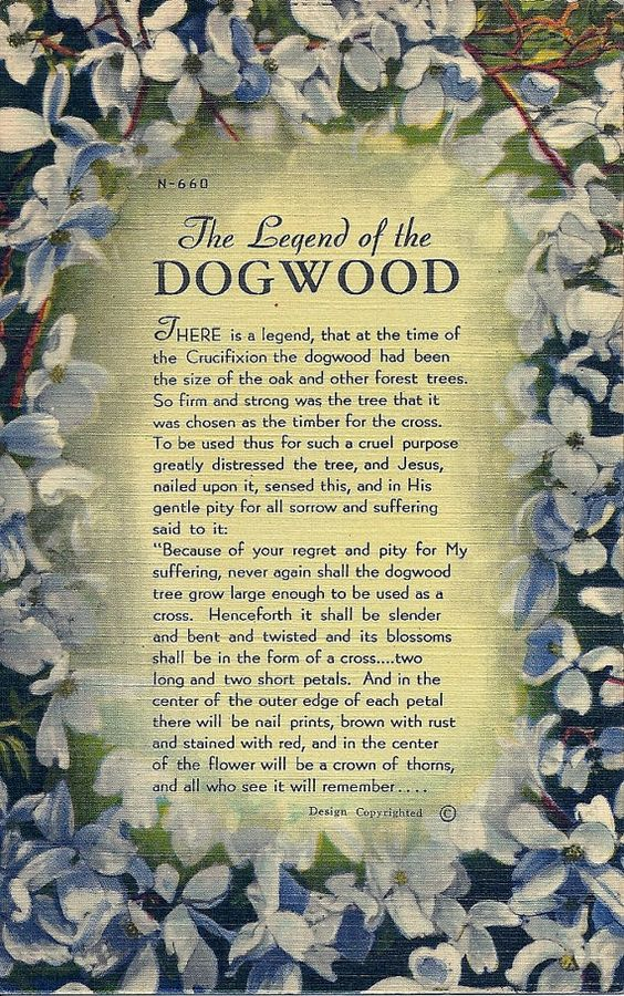 1940s Vintage Legend of the Dogwood by DecadesVintageOnEtsy