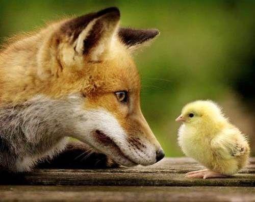 Daily Awww: A whole buncha cute animals (30photos) - animals-adorable-25