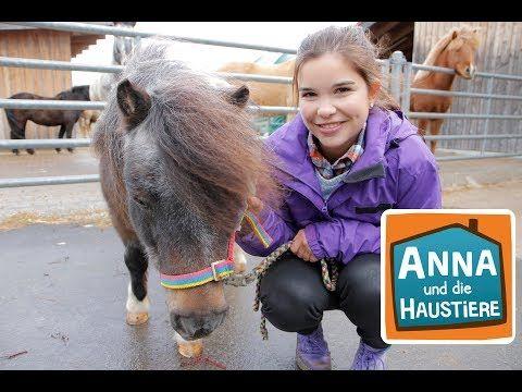 Pony Information Fur Kinder Anna Und Die Haustiere Youtube