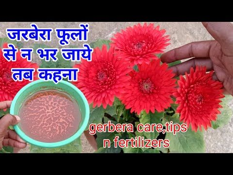 English Grammar With Bengali Flowers English To Bangla Meaning Daisy Flower Meaning Flower Names Flower Meanings