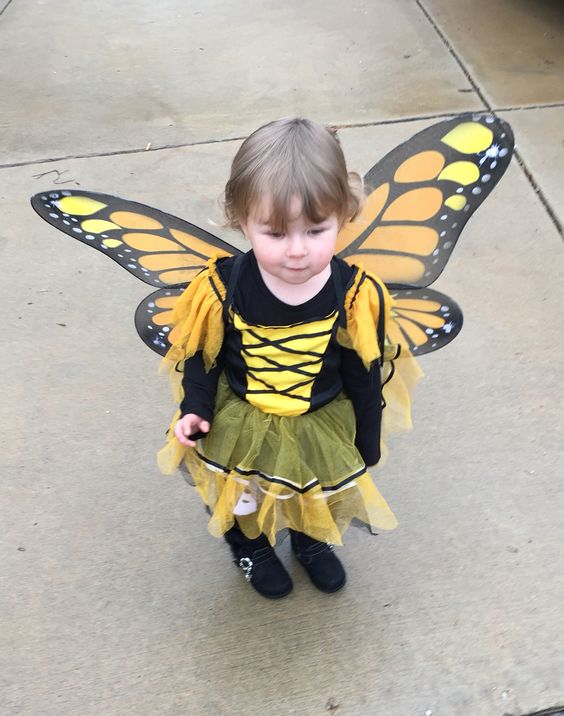 Cutest Butterfly Ever