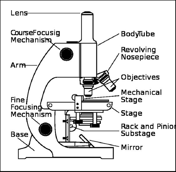 microscope under euglena diagram