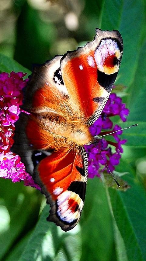 Colorful life is happy life! -- Beautiful butterfly