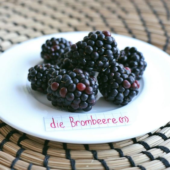 die Brombeere - blackberry