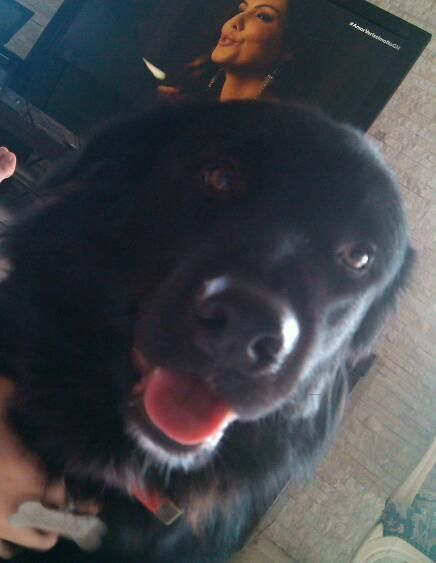 Existe cão mais lindo do que euzinho? Nãooo.... <3