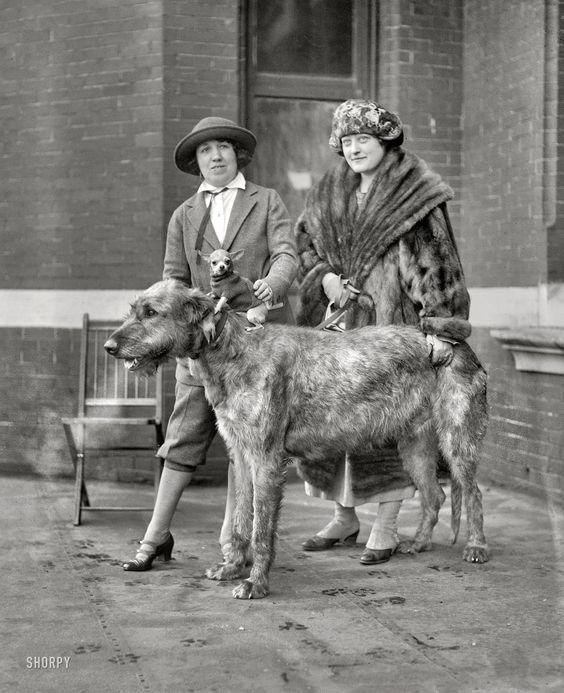 """A great find on shorpy.com: January 1923. """"Dog show."""" On a cold day in Washington, D.C., strategies for keeping warm include wearing fur or a Chihuahua -- or both. #vintagephotos"""