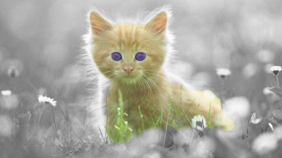 Pisică Imagini de Fundal – Aplicații Android pe Google Play