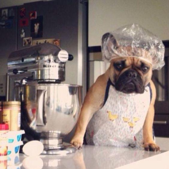 Frenchie S Kitchen Dog Food