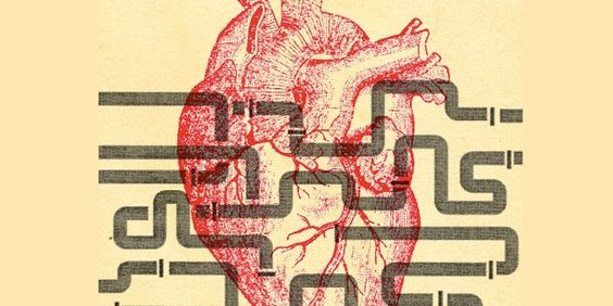 Will Gut Bacteria Protect Your Heart and Brain? - Health, Fitness, Lifestyle