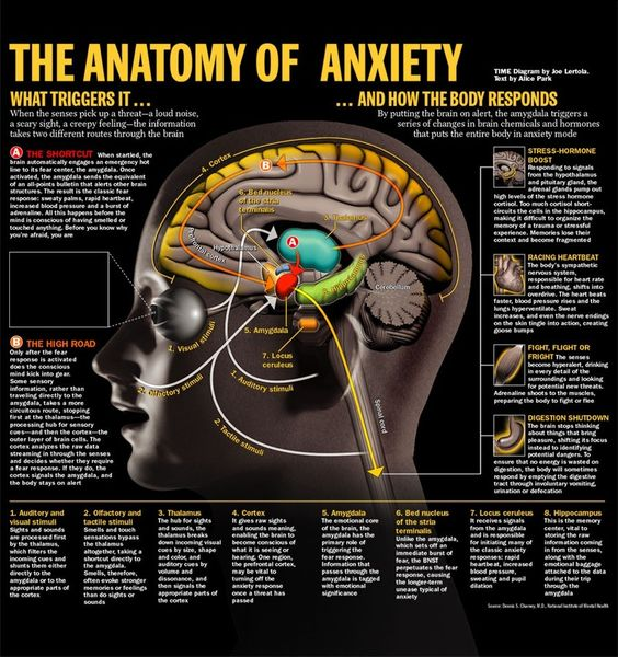 The Anatomy of Anxiety, from Time Magazine, illustrated by Joe Lertola