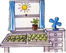 Starting Seedlings Indoors. Growing seeds early – start them inside
