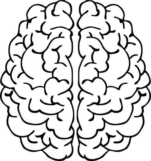 El Cerebro Para Colorear Para Niños Cerebro Para Colorear