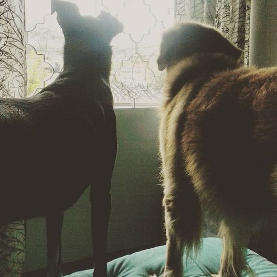 La cuadra tiene dos nuevas viejas chismosas. Pollock y Conan