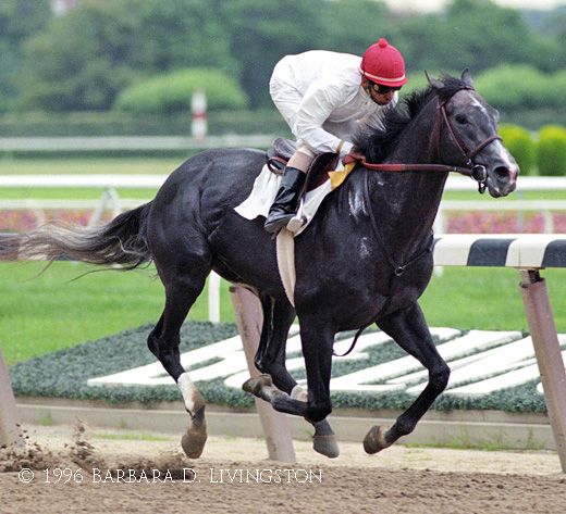 UnbridledS Song  A Photo Album  Daily Racing Form  My Favorite