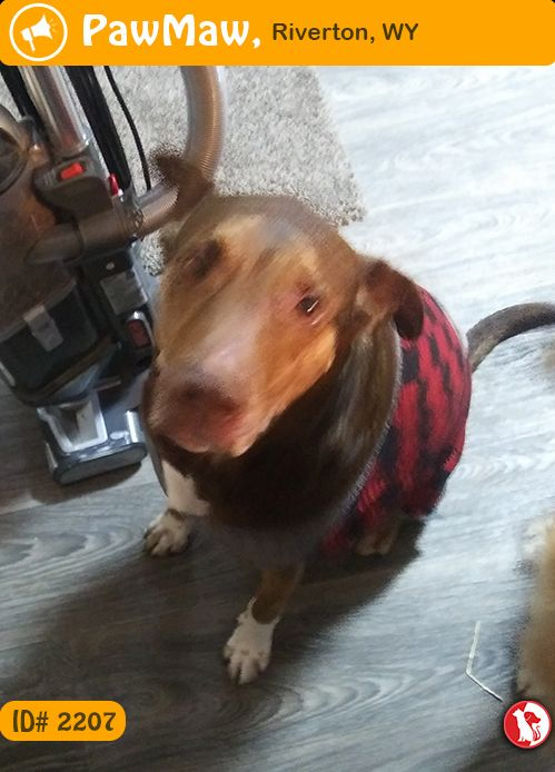 Let Your Nearby People Know This Pet Was Found On 12 29 2018 In Riverton Wy Usa Pets Dogs Animals