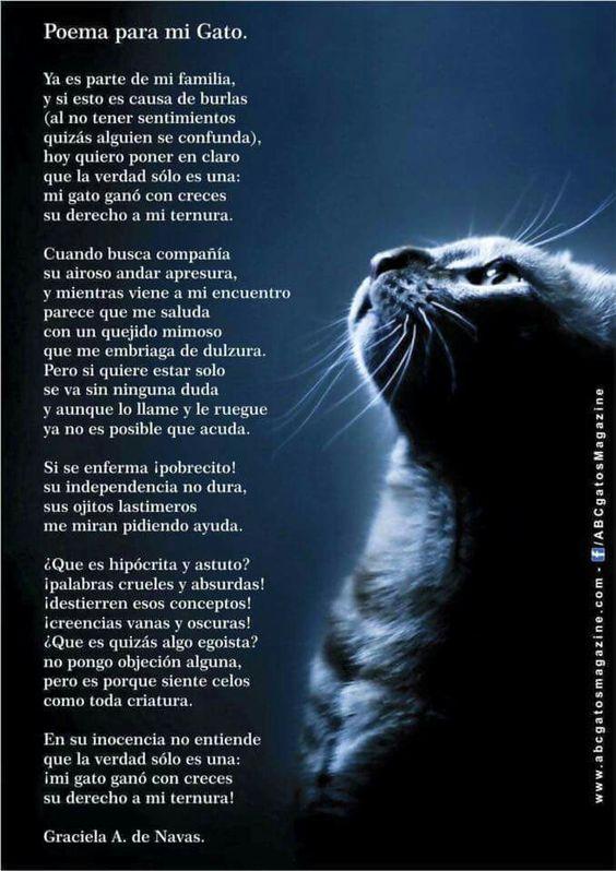 Poema a mi gato