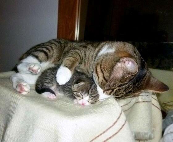 Amor gatos