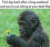 Image result for first week of school humor