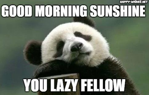 Humorous Good Morning Memes For Her Funny Morning Memes Good Morning Beautiful Text Good Morning Greeting Cards