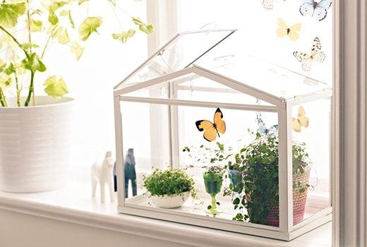 ИКЕА Растения и кашпо для улицы | Домашние сады, Растения