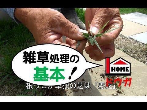 プロが教える雑草処理の基本 Youtube 画像あり 雑草 処理 雑草 掃除 道具