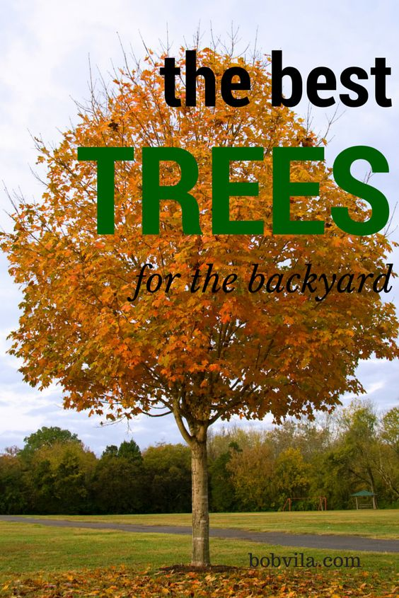 Fall is one of the best times to plant many varieties of small trees. Allow enough time for the roots to become established before winter. Here are some of the best trees for your yard.