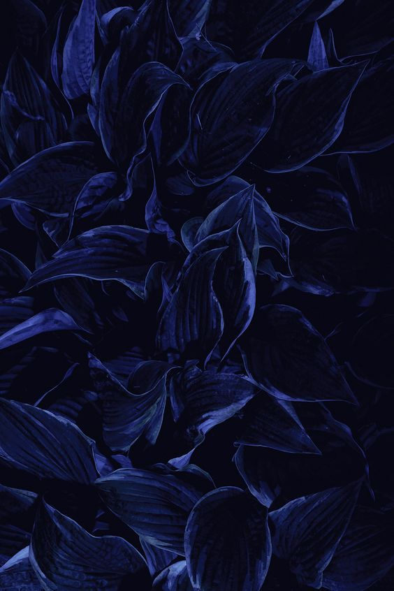 Pin by ⚜️Hilaluna⚜️ on \u2022Starry Midnight Blue\u2022