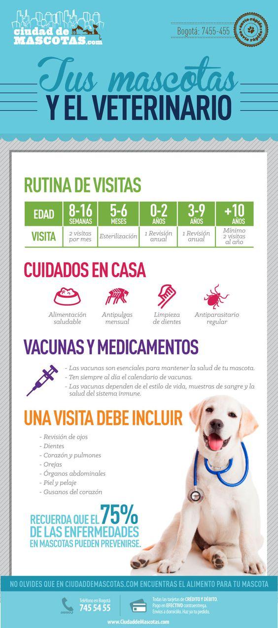 Muchas de las enfermedades en perros y gatos son de fácil prevención con una rutina adecuada de visitas al veterinario.