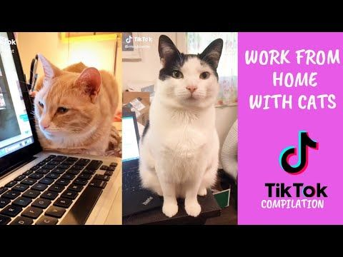 Work From Home With Cats Tiktok Compilation Kerja Dari Rumah Ohhooman Youtube Cats Working From Home Work Humor