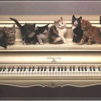 Crazy cat lady piano lessons