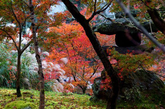 https://flic.kr/p/BGx7Ht | 永観堂の紅葉 | 20151124-DSC08176  京都市左京区 永観堂(Eikando-temple)
