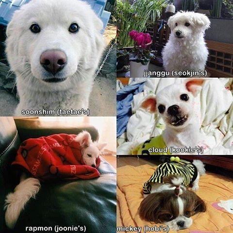 BTS's dogs