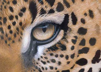 leopard eye close up - photo #8