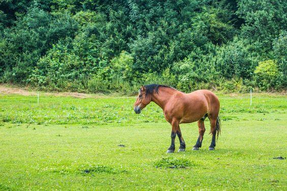 Descargar foto gratis de un caballo marrón en un prado verde http://imagenesgratis.eu/imagen-de-un-caballo-marron-en-un-prado-verde/