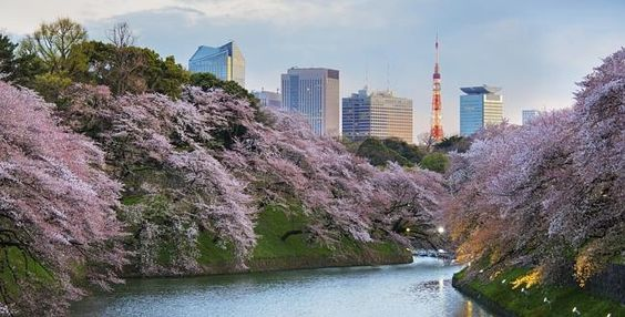 Qantas hopes Aussies can add Japan to their travel schedule, adding additional flights to national capital