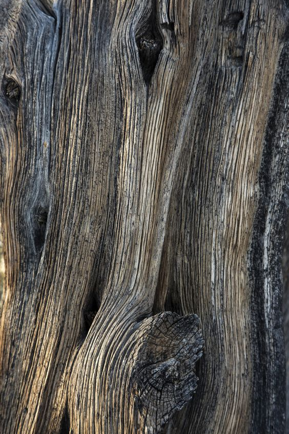 The character & natural beauty of the light grayish brown bark!