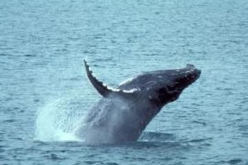 Whale Watching and Dolphin Spotting Cruise from the North Island 火曜日 $89.99
