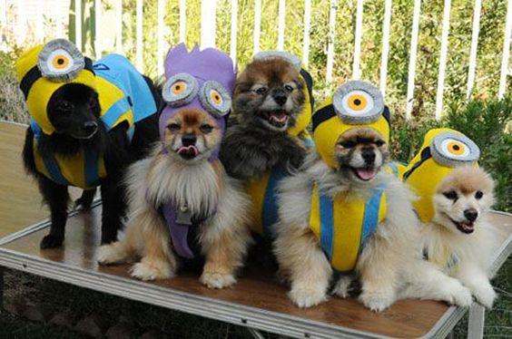 Perros Minions.