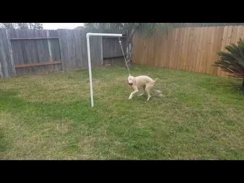 Diy Tether Tug Dog Toy Youtube Dogsupplies Dog Supplies