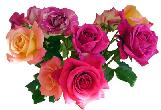 Roses roses roses.... great for scrapbooking credit ~ link ~ and plz fave!:
