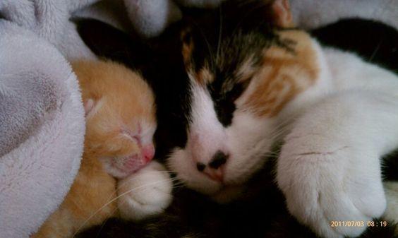 Mommy and Milo, my favorite little orange kitten <3