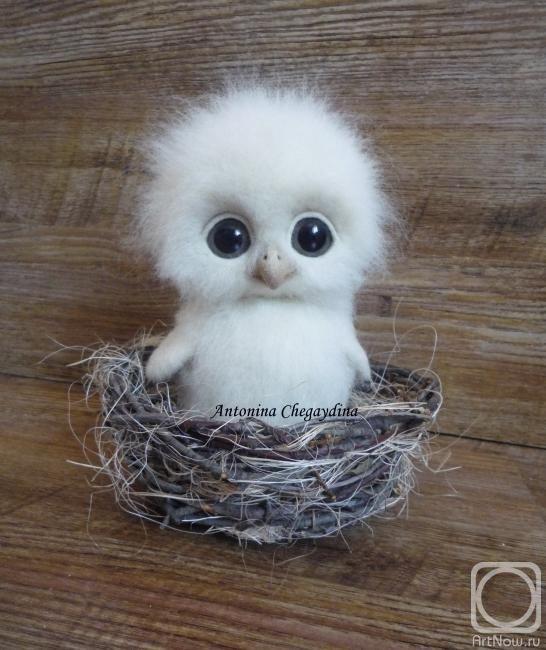 Chegaydina Antonina.  I want him so bad.  I love owls!