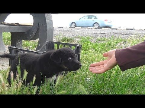 Rescue Of Three Puppies Who Didn T Know They Were Too Close To A Busy Road Youtube Puppies Dog Control Funny Dog Pictures