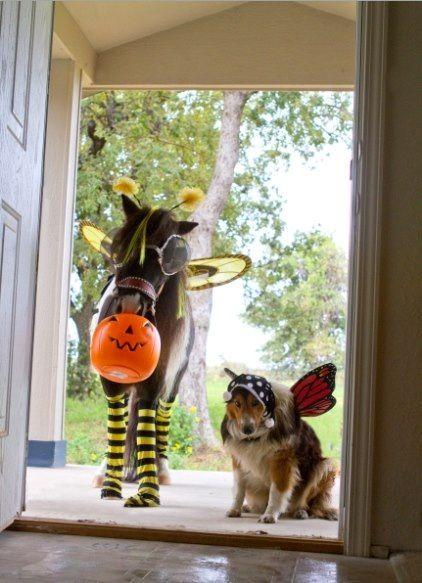 Horse costume: