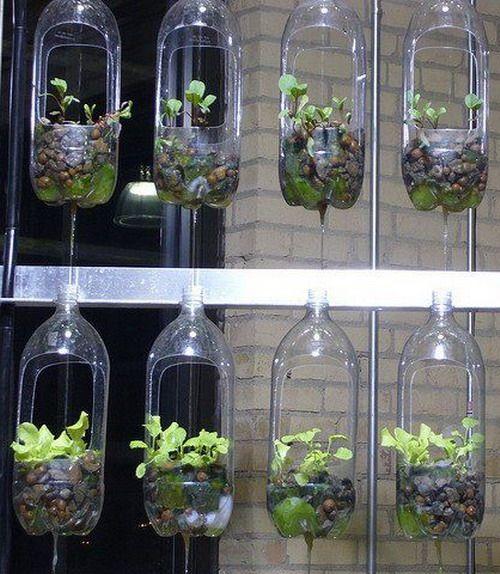 Si quieres tener un pequeño huerto en casa o un . invernadero solo necesitas unas botellas de plástico Os he tr...