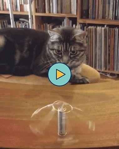 O gato está surpreso com esse truque